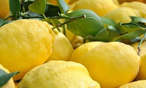 Diete Per Perdere Peso In Pochi Giorni : Dieta del limone come depurare il nostro corpo in pochi giorni